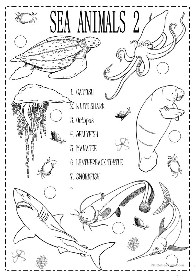 74 free esl sea animals worksheets. Black Bedroom Furniture Sets. Home Design Ideas