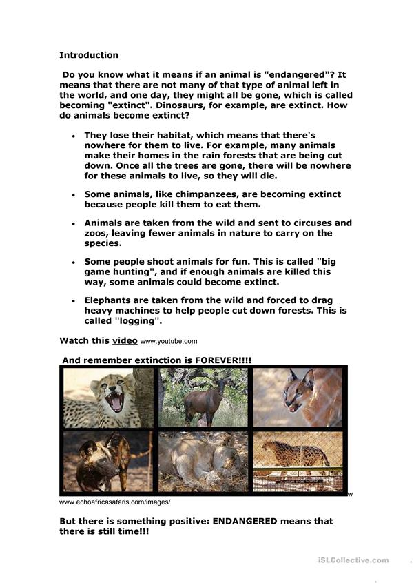 Endangered Animals Webquest
