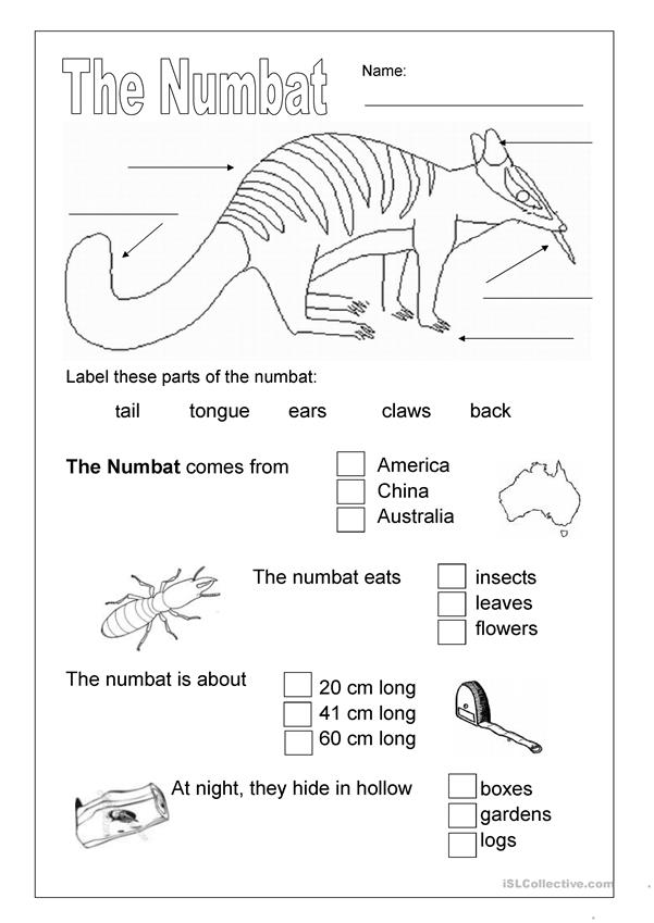 The Numbat ; an Australian animal