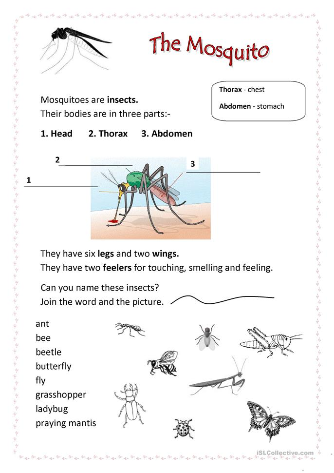 Printables Free Insect Worksheets 54 free esl insects worksheets mosquito