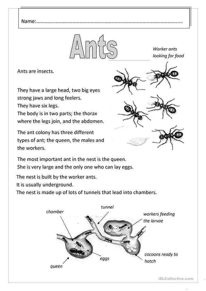 Printables Free Insect Worksheets 50 000 free esl efl worksheets made by teachers for ants