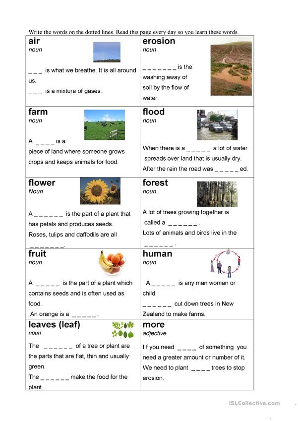 plant vocabulary
