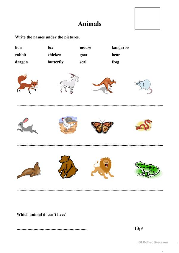 matching animals and pictures
