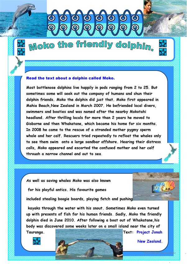 Reading Moko The Dolphin