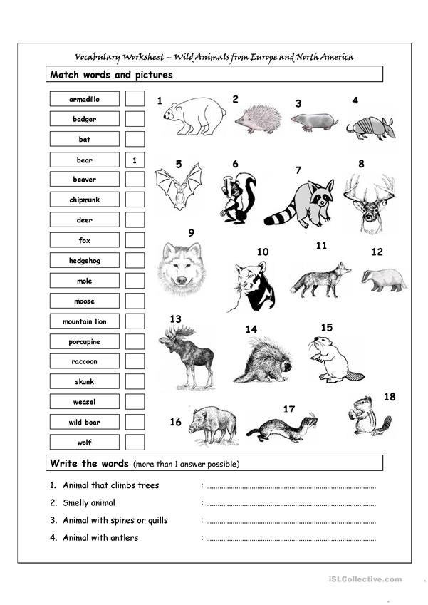 Vocabulary Matching Worksheet - Wild Animals from Europe & North America