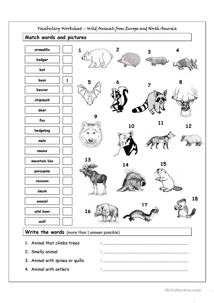 77 free esl wild animals worksheets. Black Bedroom Furniture Sets. Home Design Ideas