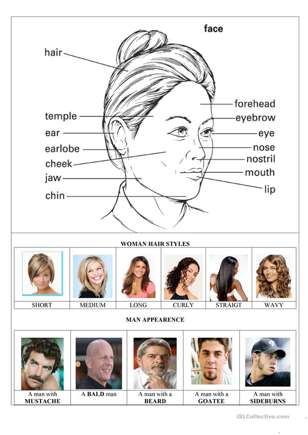 The Face Parts and Woman Hairstyles