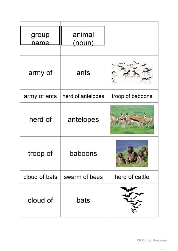 collective nouns of animals
