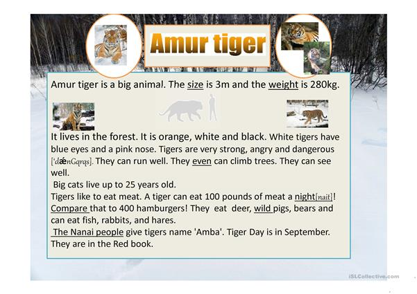 Amur tiger. Some facts about the animals