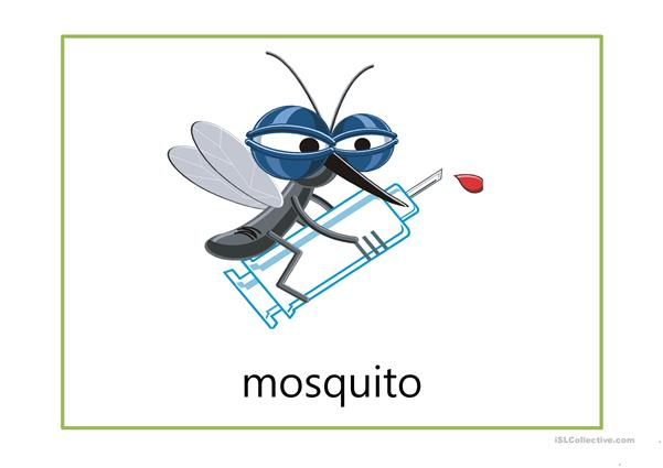flash cards-insects