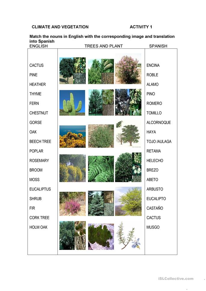 Spanish Climate and Vegetation - ESL worksheets