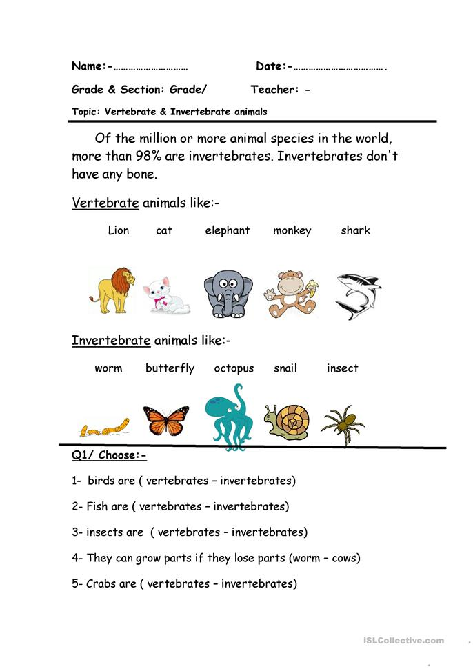 Unusual image throughout free printable worksheets on vertebrates and invertebrates