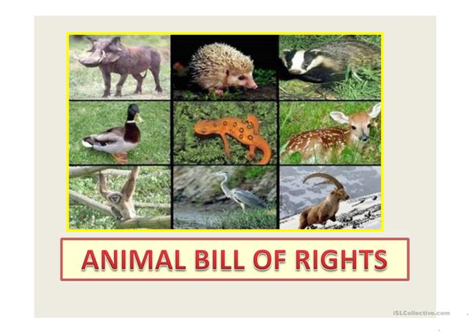 animal rights bill The animal bill of rights needs to be expanded and shared more vastly so people can start gaining a better understanding of the cruelty happening to animals, and what they can do to give animals a .
