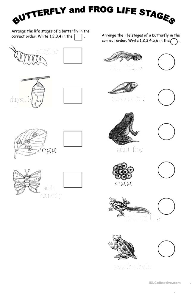 Frog Coloring Pic additionally Tree Frog likewise Animal Skeleton Matching Cards X besides Pom Pom Frog Egg Craft likewise Frog Anatomy. on frog life cycle printable