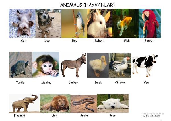 ANIMALS AND NUMBERS