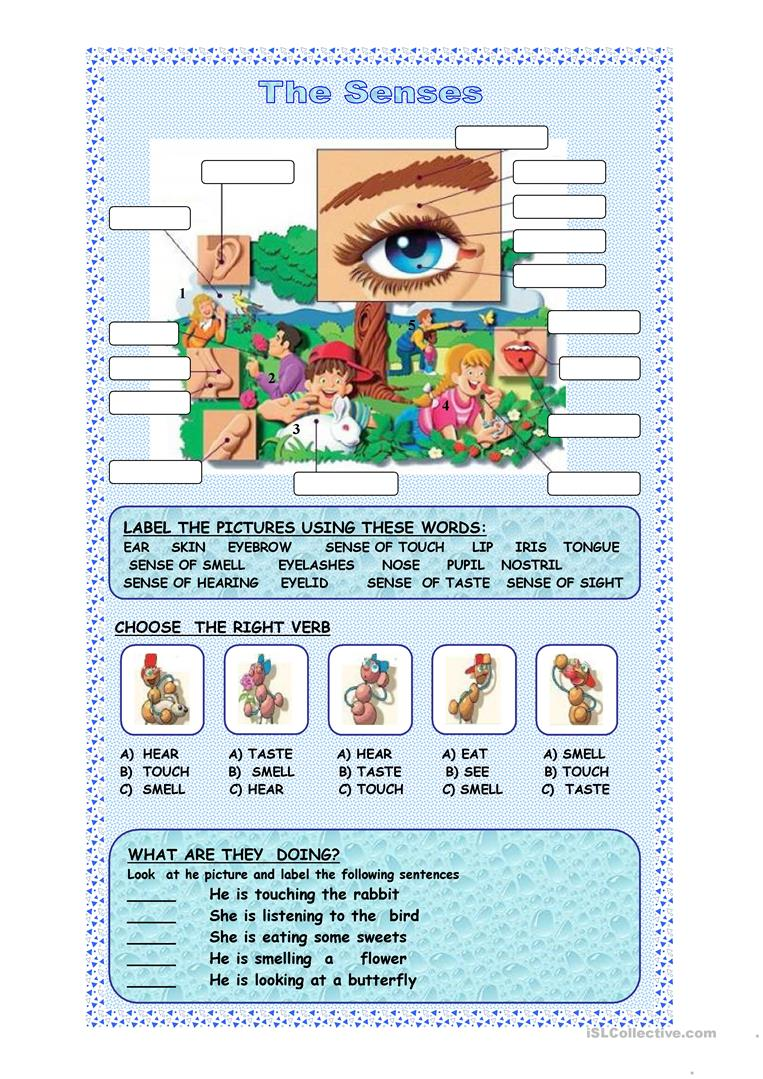 37 FREE ESL five senses worksheets