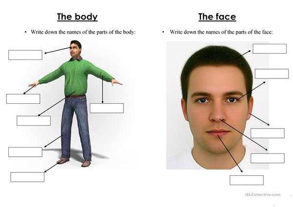 Parts of the body & face