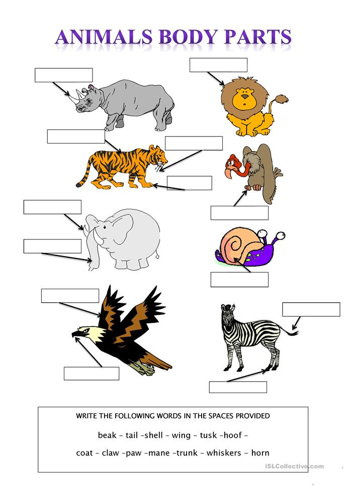 Worksheet Works Body Coverings : Animal body parts worksheets for kindergarten animals at