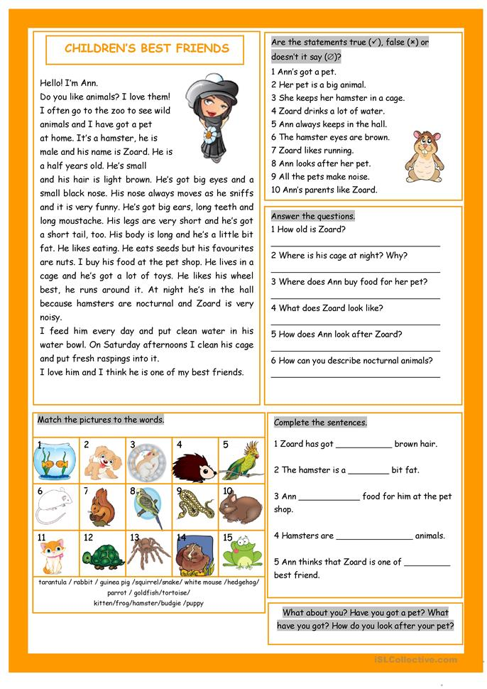 pet reading exercises pdf with answers
