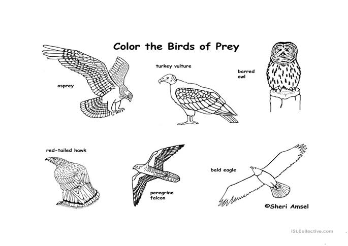 Color the birds of prey worksheet free esl printable for Birds of prey coloring pages