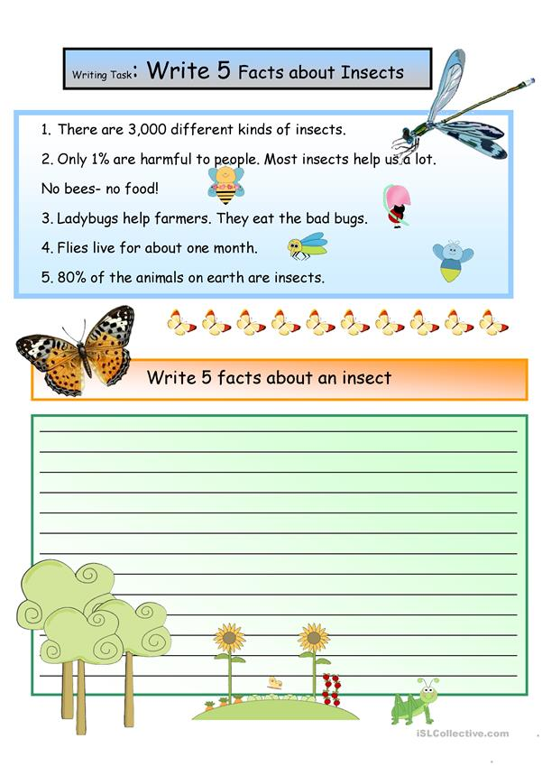 Creative Writing: Facts About Insects #6 A1 Level