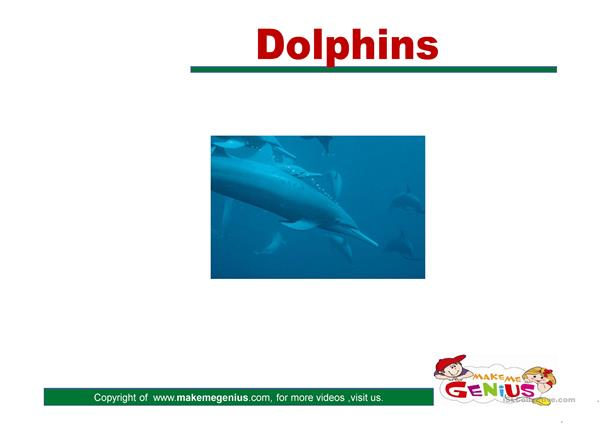 DOLPHINS POWER POINT