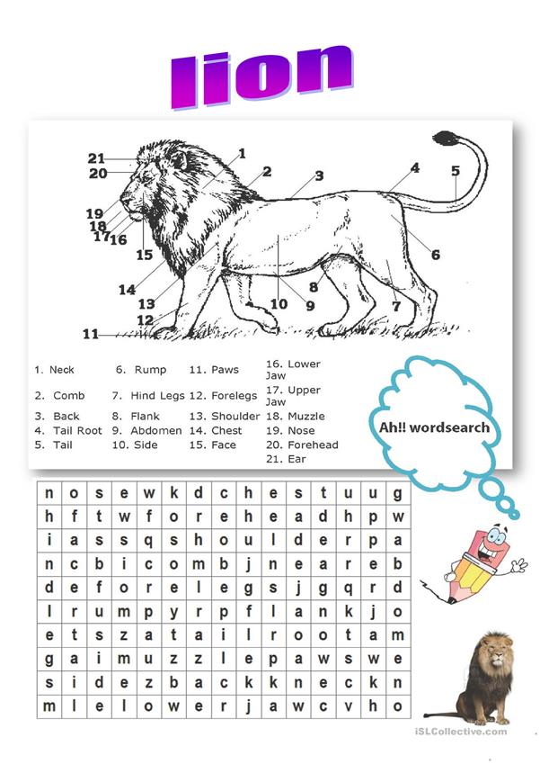 lion  body parts vocabulary