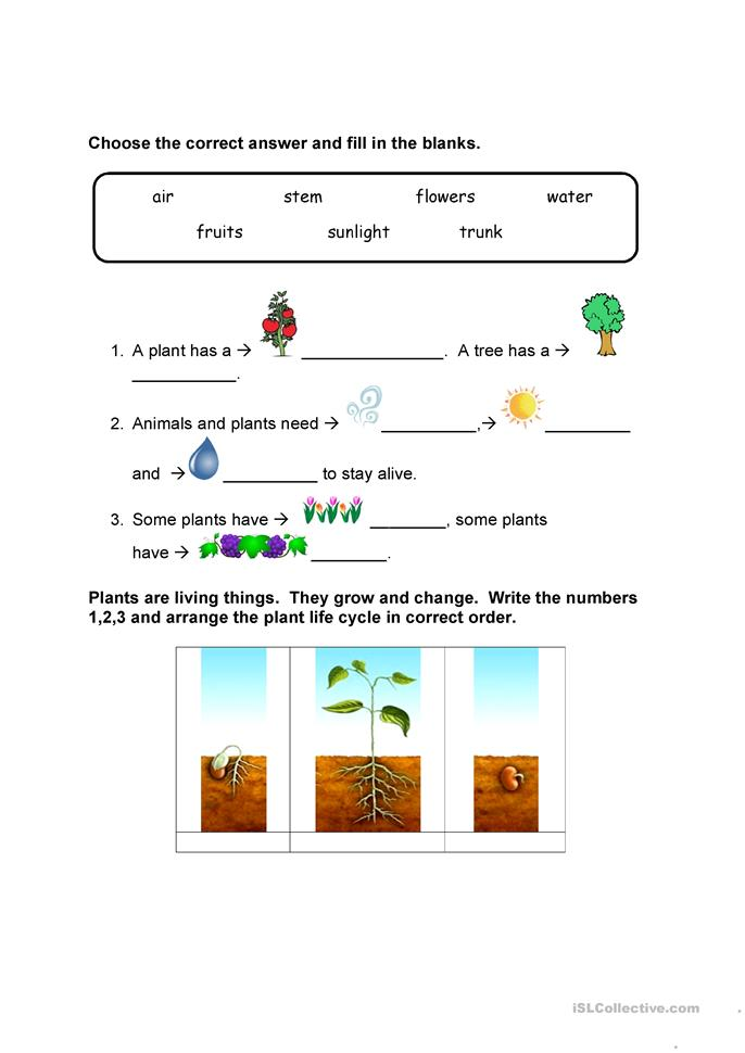 parts of a plant and plant cycle worksheet - Free ESL ...