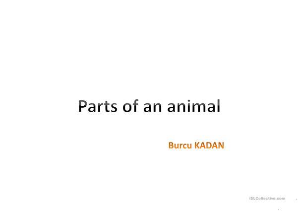 ANIMALS' BODY PARTS