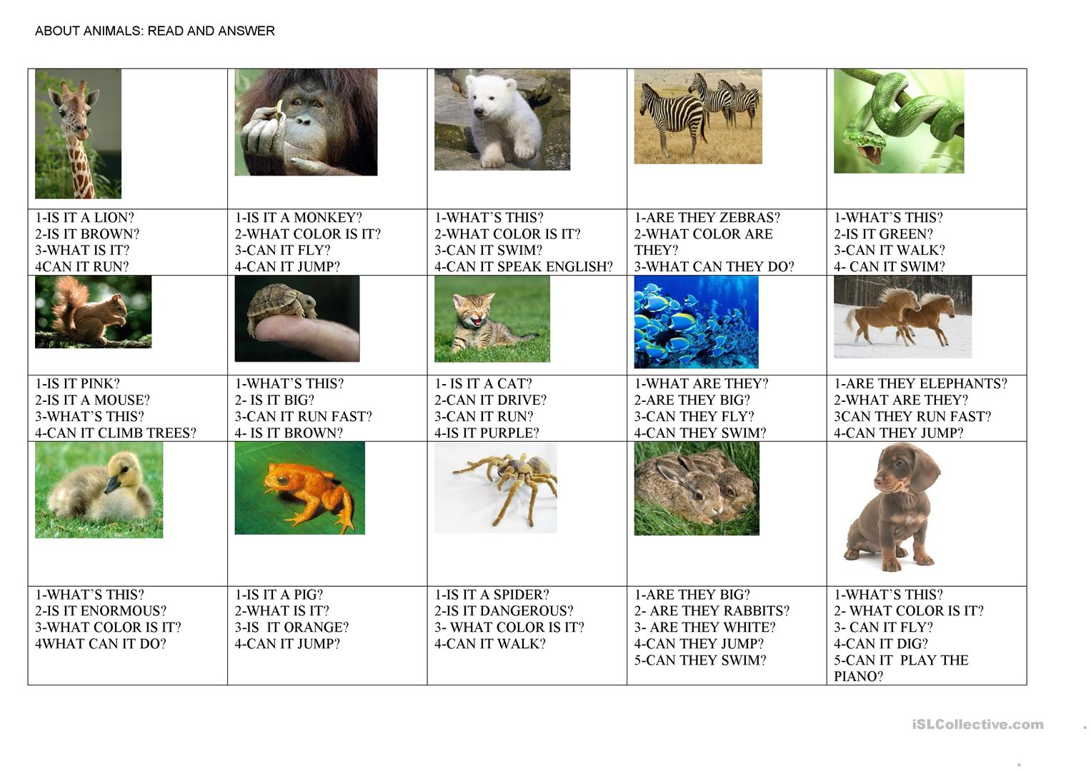 questions about animals worksheet free esl printable worksheets