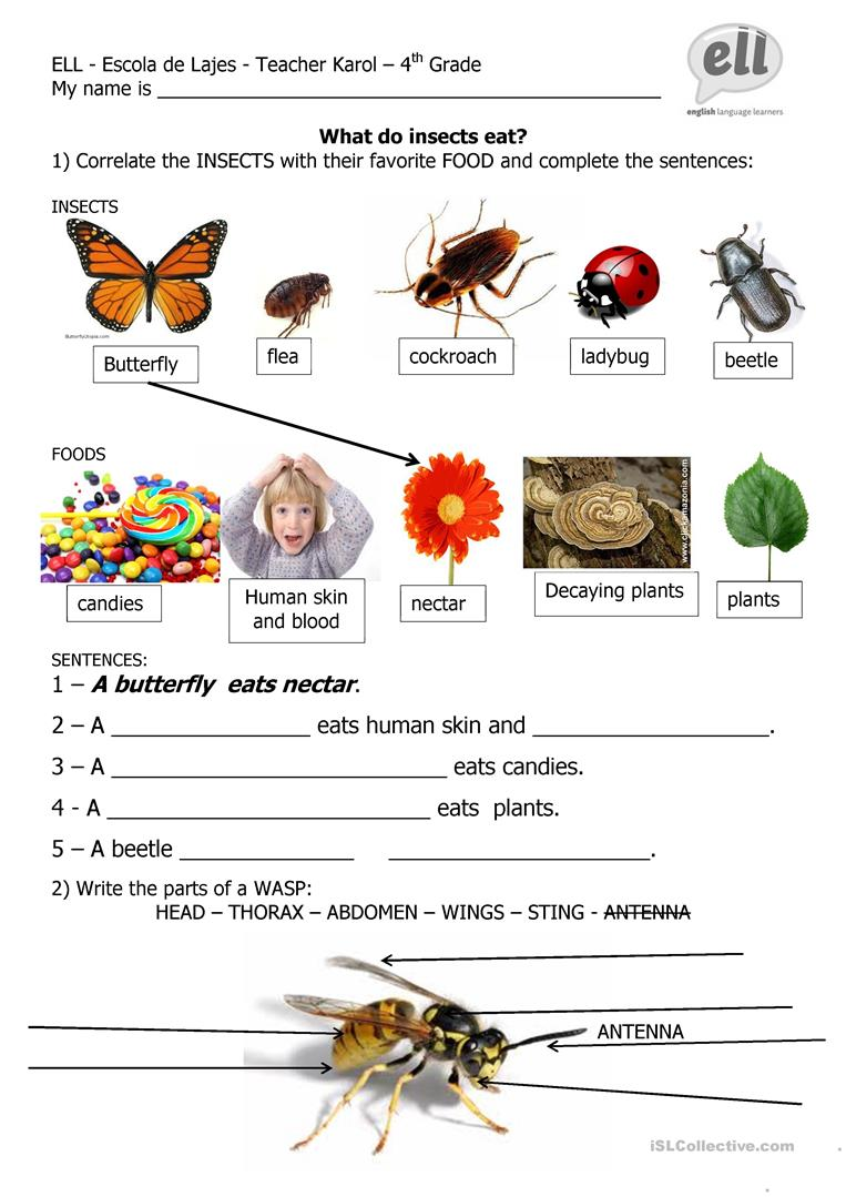 61 Free Esl Insects Worksheets