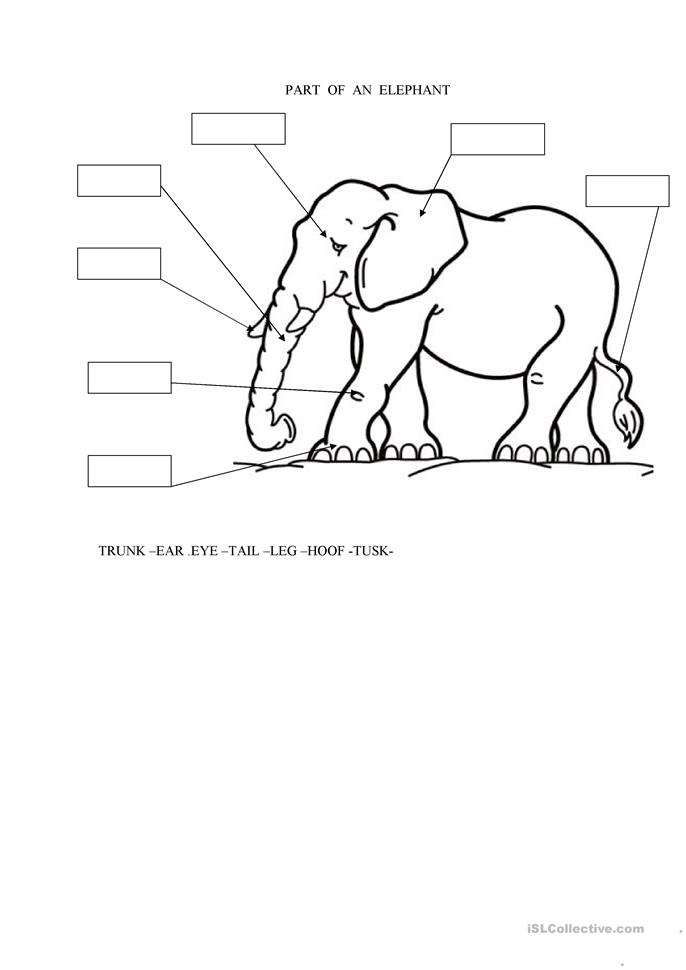 parts of an elephant worksheet