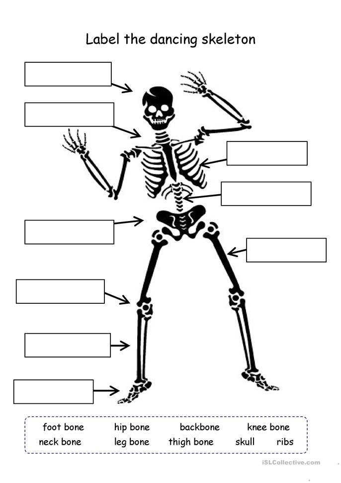 Worksheets Skeleton Labeling Worksheet label the skeleton worksheet free esl printable worksheets made by teachers