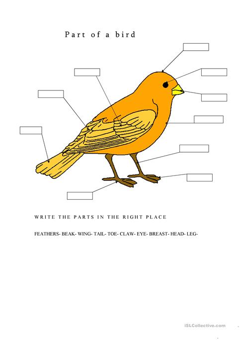 Parts Of A Bird Worksheet Free Esl Printable Worksheets Made By