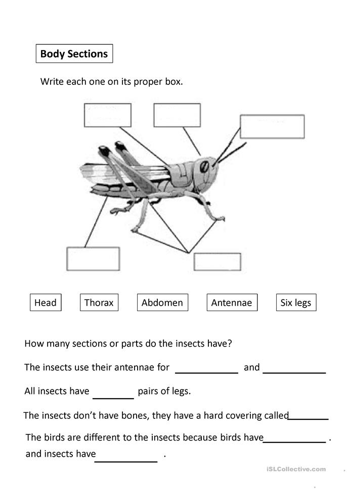INSECTS worksheet - Free ESL projectable worksheets made by teachers