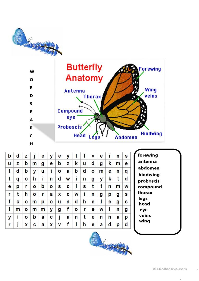Outstanding Butterfly Anatomy Worksheet Images - Anatomy and ...