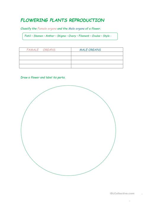 Flowering Plants Reproduction Worksheet Free Esl Printable