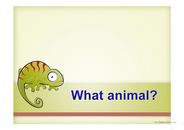 What Animal?