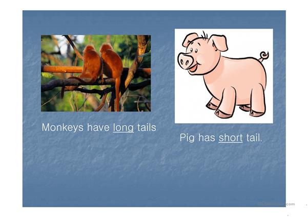 animals' body parts ppt