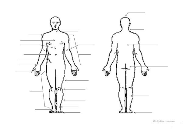 human body outline - english esl worksheets for distance learning and  physical classrooms  islcollective