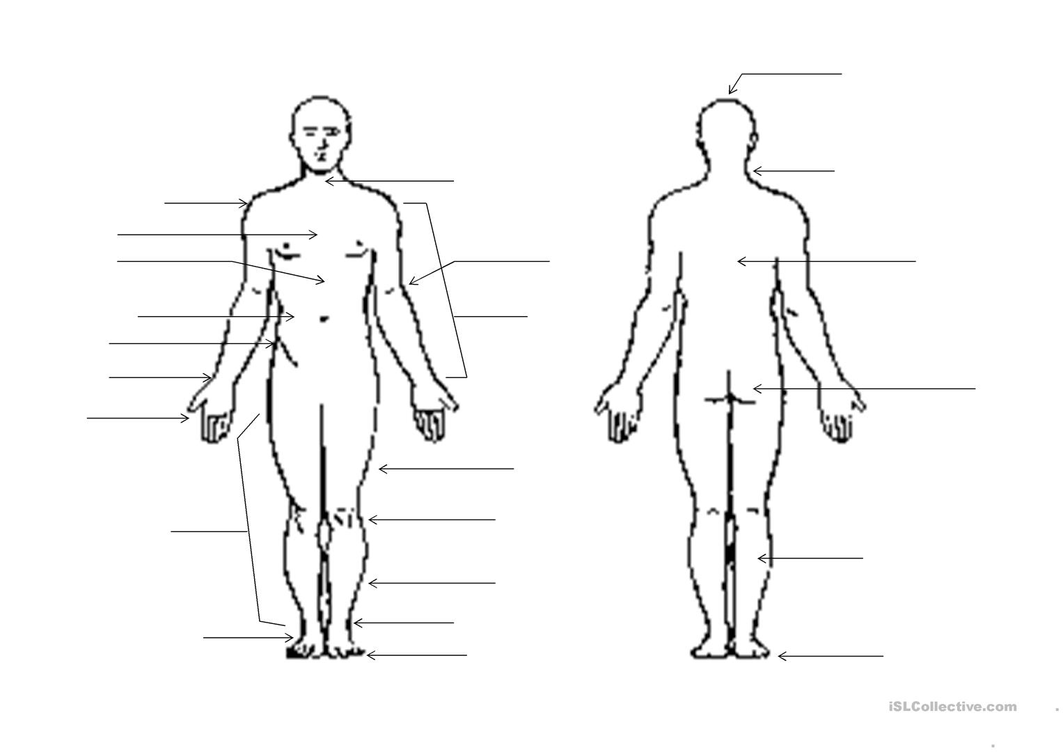 Human Body Outline worksheet - Free ESL printable worksheets made by ...