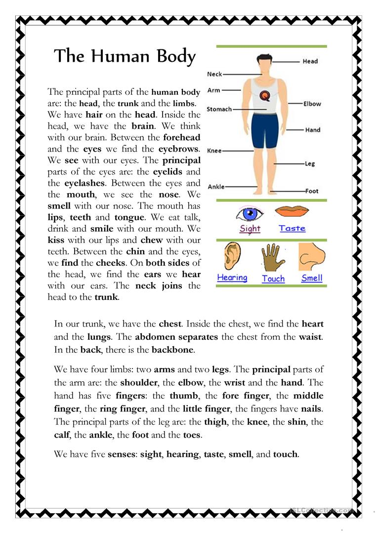 27 FREE ESL human body worksheets