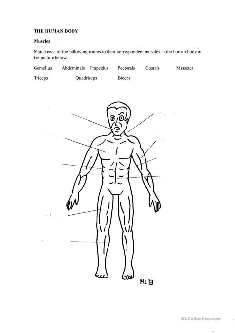 The Human Body: Muscles worksheet - Free ESL printable worksheets ...