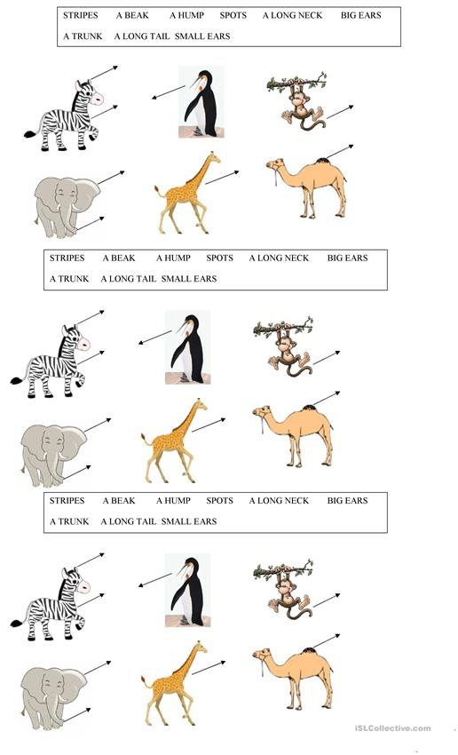 parts of the animals