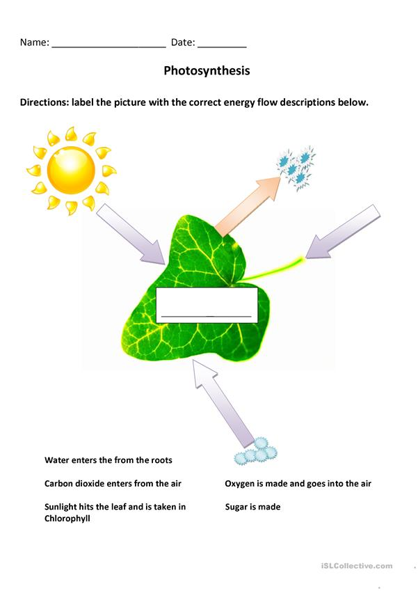 Photosynthesis Diagram