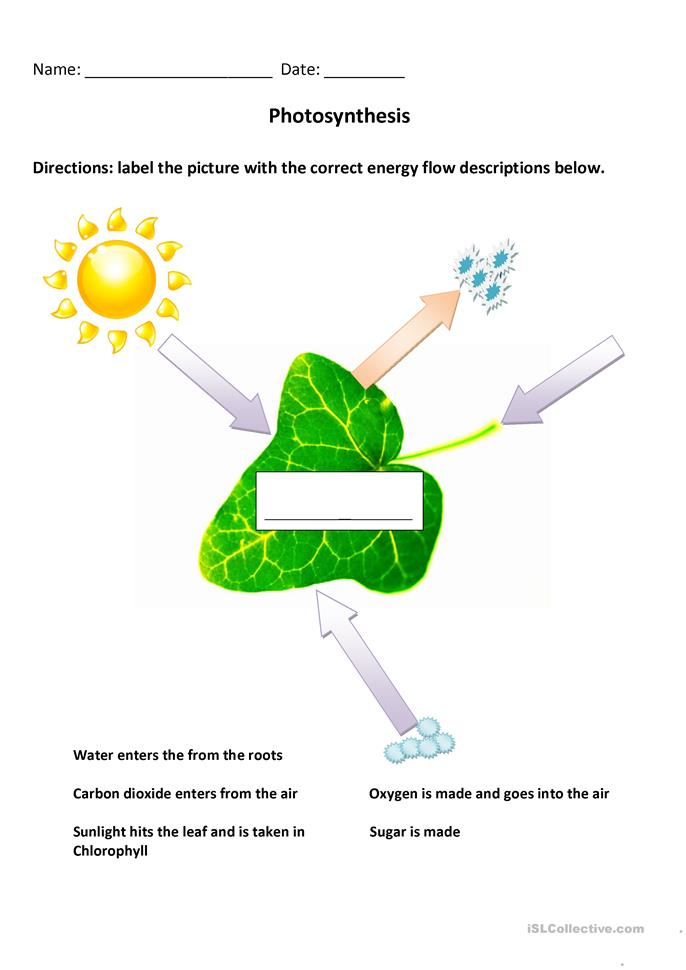 Worksheets Photosynthesis Diagram Worksheet Answers photosynthesis diagram worksheet free esl printable worksheets made by teachers