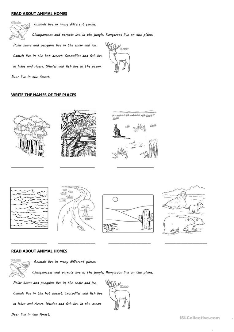 ANIMALS AND THEIR HOMES - English ESL Worksheets for ...