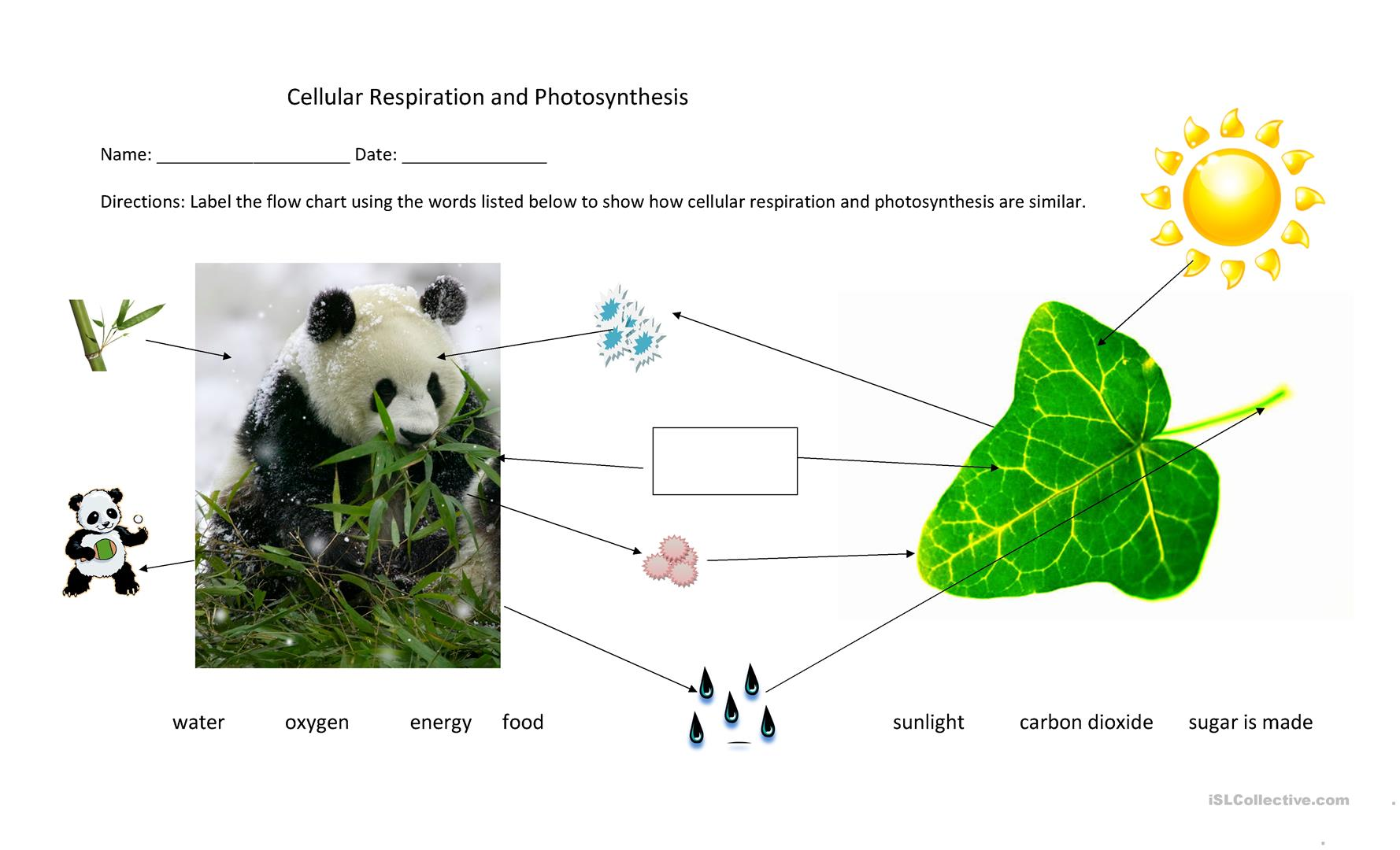 2 free esl photosynthesis worksheets cellular respiration and photosynthesis flow chart pooptronica Image collections