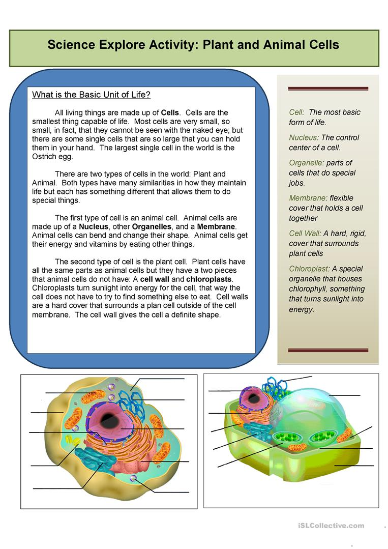 Worksheets Biology Reading Comprehension Worksheets 7 free esl biology worksheets explore the cell