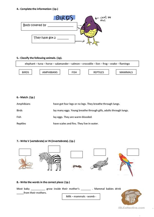 SCIENCE test (vertebrates)